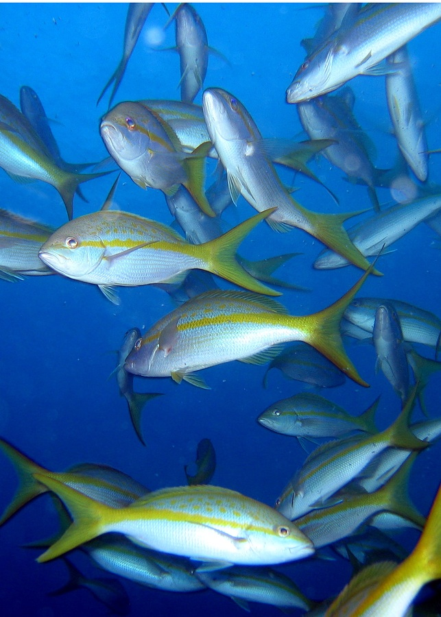 fishstockphoto_school_of_fish_on_a_reef_724038