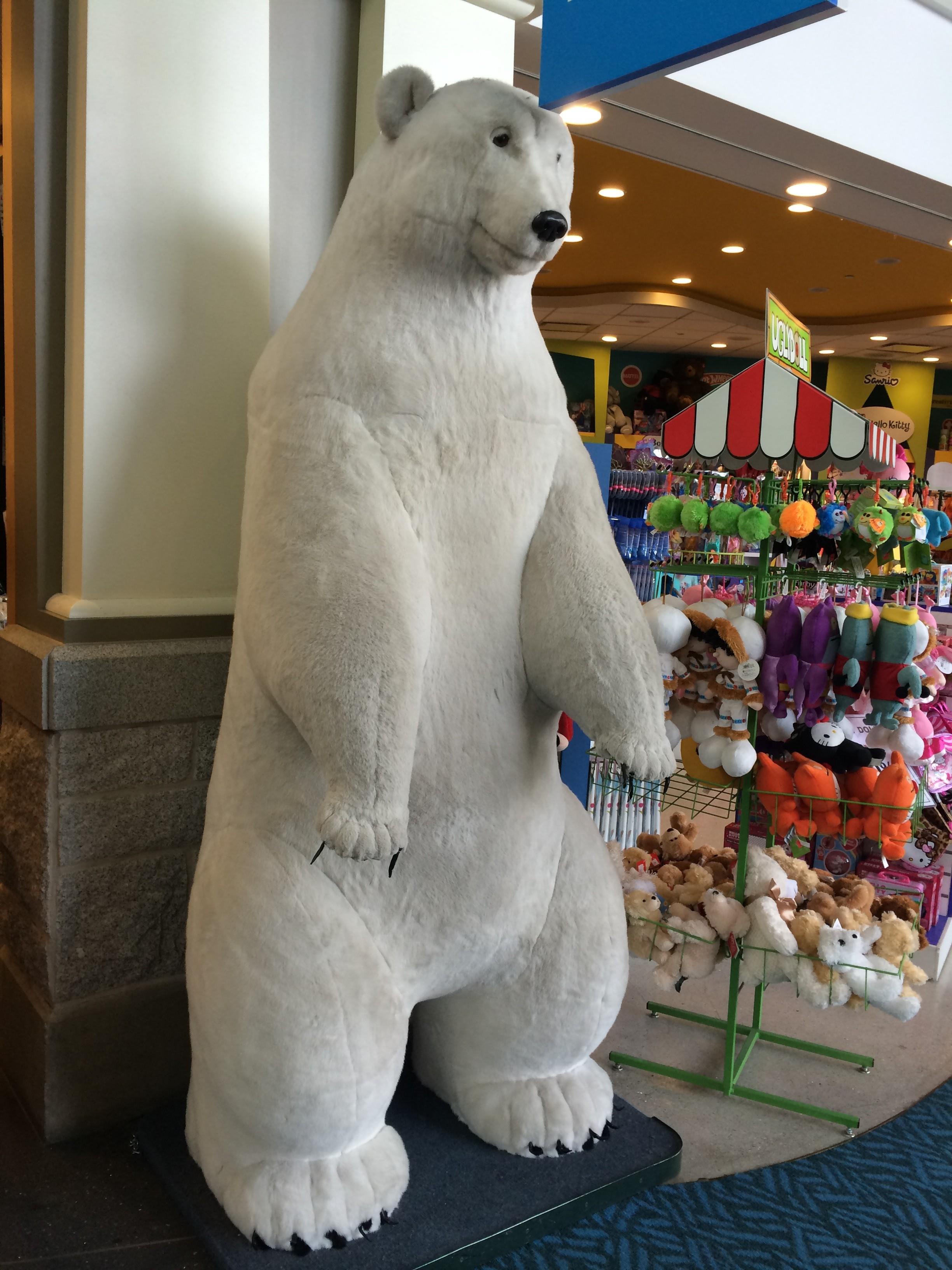 Polar Bear Vancouver Airport